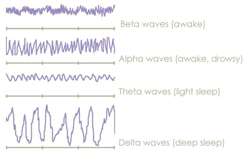 4 Sleep Stages Brainwaves